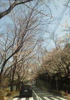 桜180325.jpg